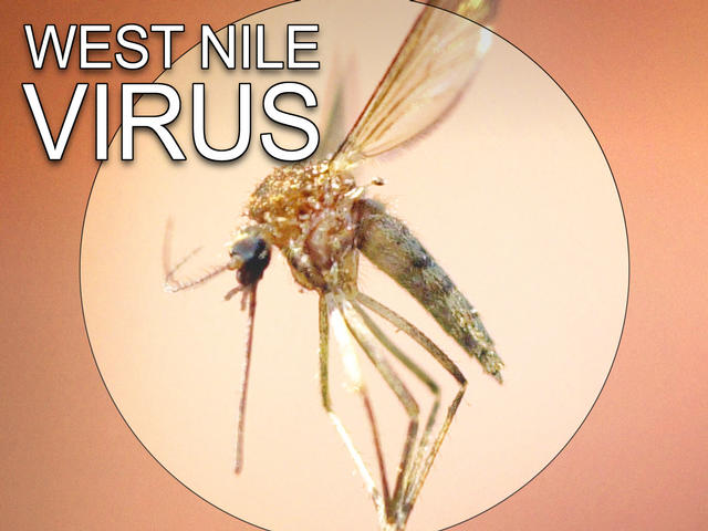West Nile Virus Detected In Rockland County Mosquitoes
